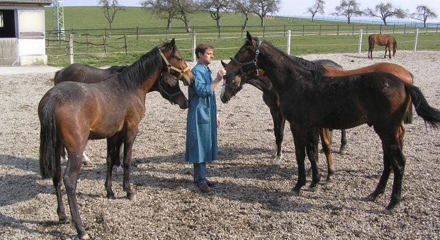 Allgemeiner Tiergesundheitsschutz