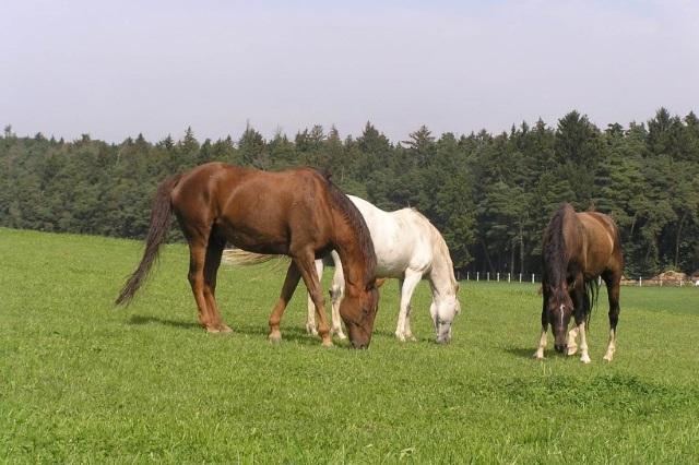 Tierschutz und pferdegerechte Haltung
