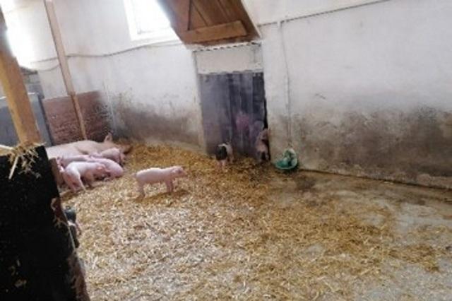 Tierschutz / artgerechte Haltung